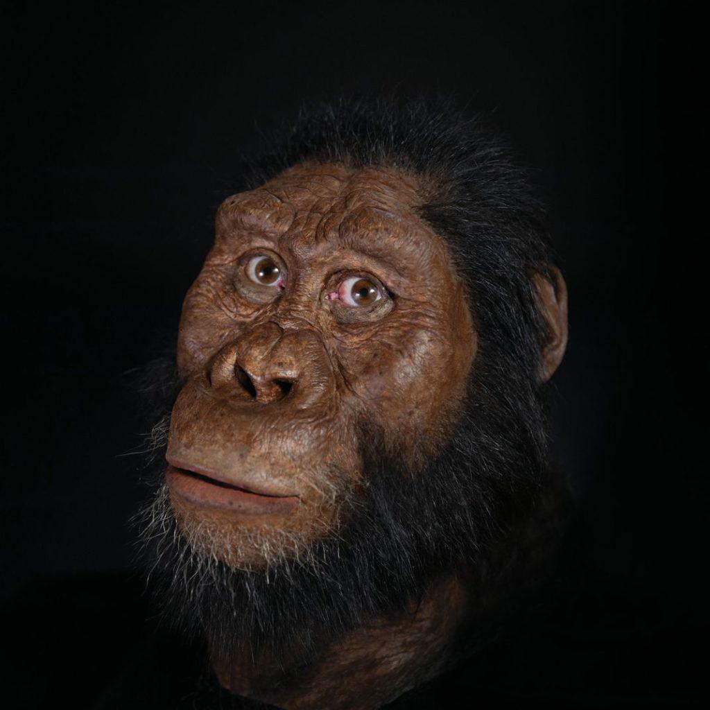 3.8-Million-Year-Old Human Ancestor Skull