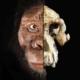 ethiopia skull found
